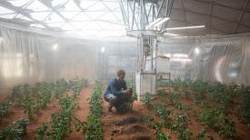 Mark Watney Potato Garden