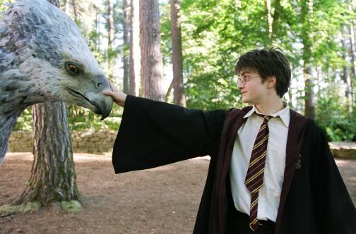 Harry & Buckbeak